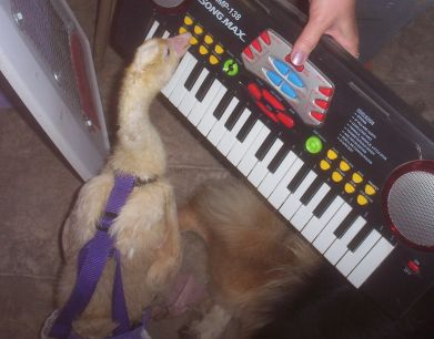 Eden Playing The Piano
